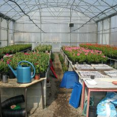 Atelier-Horticulture